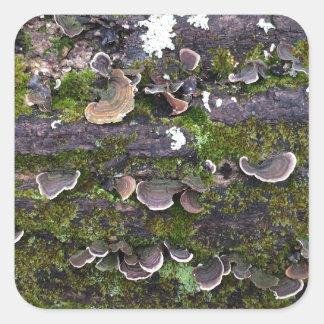 mossy mushroom fun square sticker