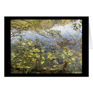 Mossy Pond Greeting Card