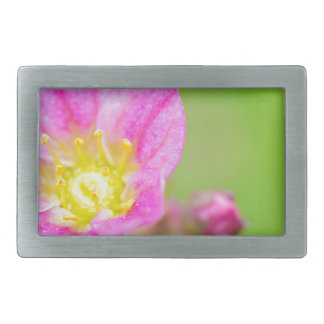 Mossy Saxifrage or rockfoil flowers macro view Belt Buckles