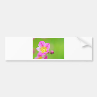 Mossy Saxifrage or rockfoil flowers macro view Bumper Sticker