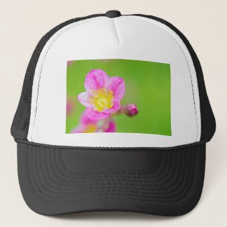 Mossy Saxifrage or rockfoil flowers macro view Trucker Hat