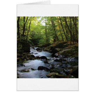 mossy stream in the forest card