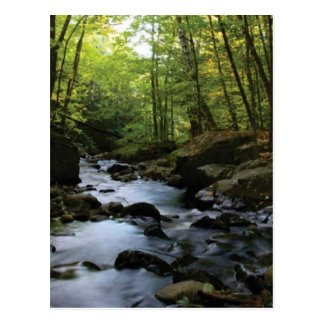 mossy stream in the forest postcard