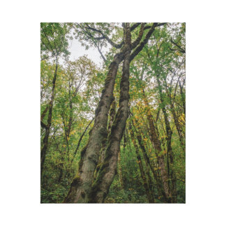 Mossy Trees in Pacific Northwest Canvas Print