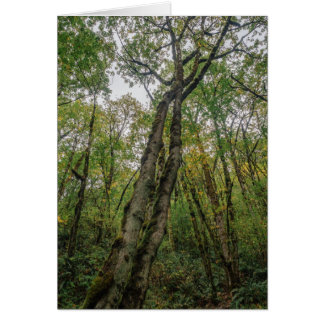 Mossy Trees in Pacific Northwest Card