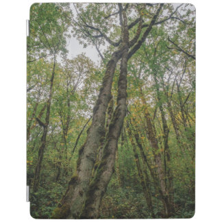 Mossy Trees in Pacific Northwest iPad Cover
