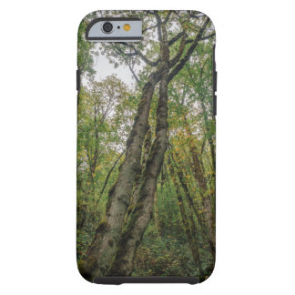 Mossy Trees in Pacific Northwest Tough iPhone 6 Case