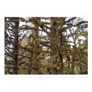 Mossy Trees Lake Quinalt Olympic National Park WA Postcard