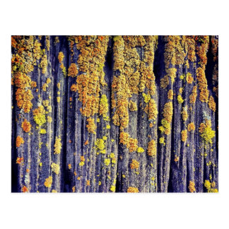 Mossy Wood Texture Postcard
