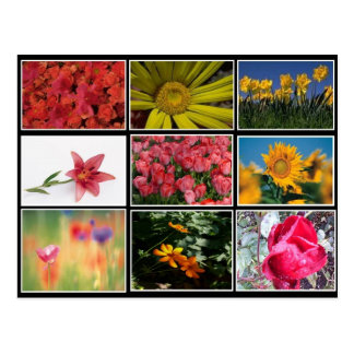 Most Beautiful Flowers Collage Postcard
