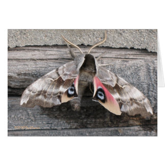 Moth, Blank Note Card by Mark Easton