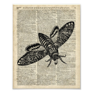 Moth Insect  Vintage Illustration on Old Book Page Photographic Print