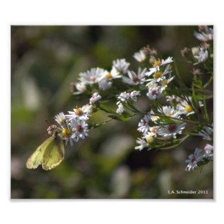 Moth on Wildflower by E.A. Schneider photo