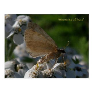 Moth on Yarrow Flowers, Unalaska Island Postcard
