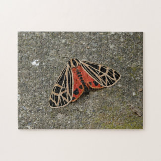 Moth, Photo Puzzle. Jigsaw Puzzle