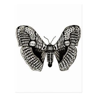 moth postcard