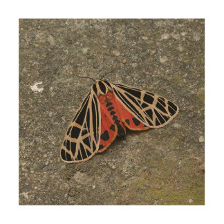 Moth, Wood Print. Wood Wall Art