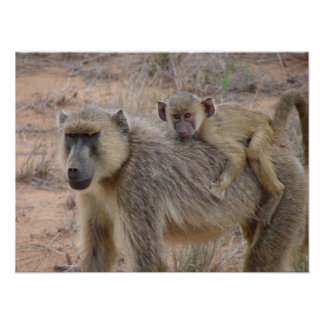 Mother and Baby Baboon Poster