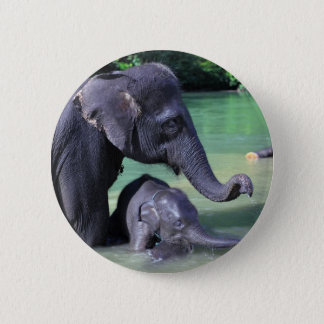 Mother and baby elephant in river 2 inch round button
