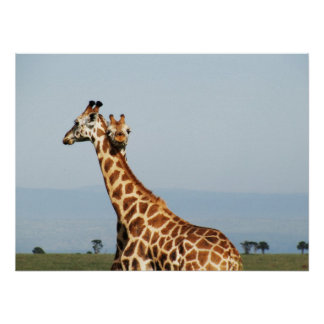 Mother and baby giraffe hugging poster