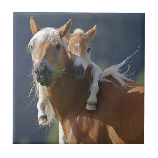 Mother and Baby Horse Tile