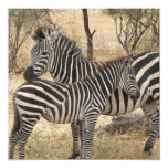 Mother and Baby Zebra  Invitations