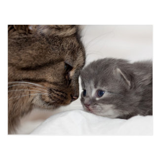 Mother and Son Cat and Kitten Postcard