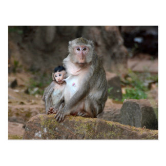 Mother Baboon With Baby Postcard