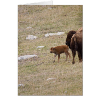 Mother Bison and Calf Card