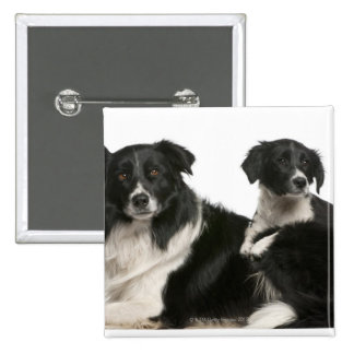 Mother border collie and puppy 2 inch square button
