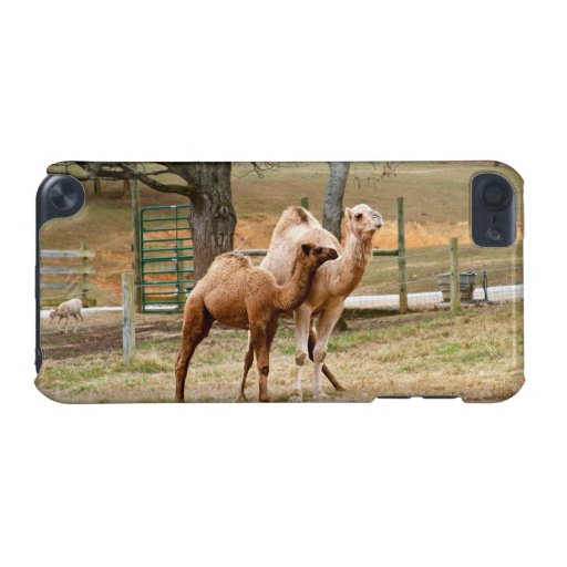 Mother Camel and Baby Animal Photo Animal Lovers iPod Touch (5th Generation) Covers