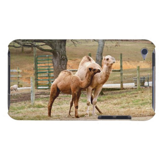 Mother Camel and Baby Animal Photo Animal Lovers Barely There iPod Covers