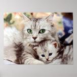 Mother Cat & Kitten Poster