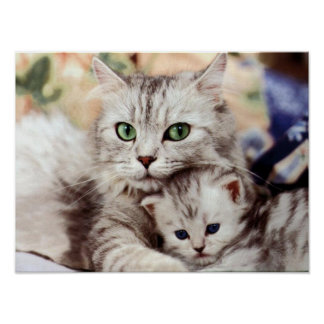Mother Cat & Kitten Poster