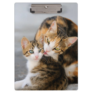Mother Cat Loves Cute Kitten Animal Photo - on Clipboard