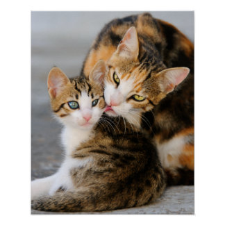 Mother cat loves cute kitten poster