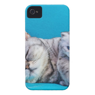 Mother cat lying with kitten on blue garments iPhone 4 case