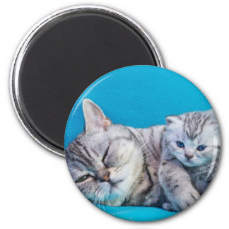 Mother cat lying with kitten on blue garments magnet