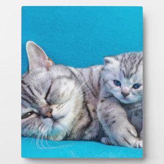 Mother cat lying with kitten on blue garments plaque