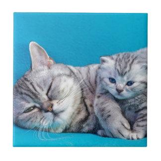 Mother cat lying with kitten on blue garments tile