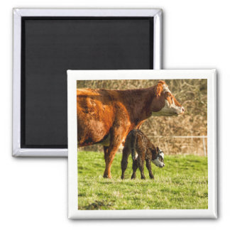 Mother Cow and Calf Magnet