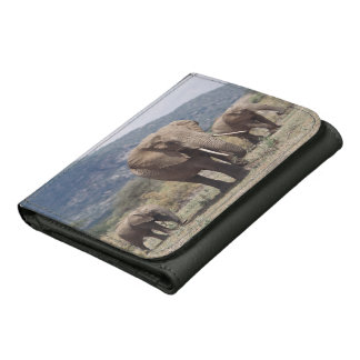 Mother elephant walking with elephant calf wallets