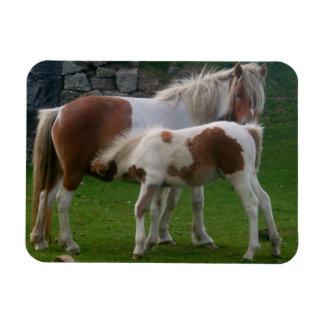 Mother & Foal Ponies Bodmin Moor Cornwall England Rectangular Photo Magnet