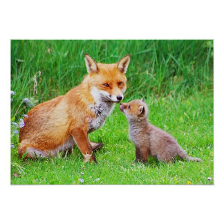 Mother fox and cub poster