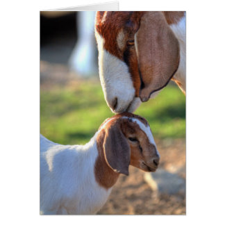 Mother goat kissing her baby on head. greeting card