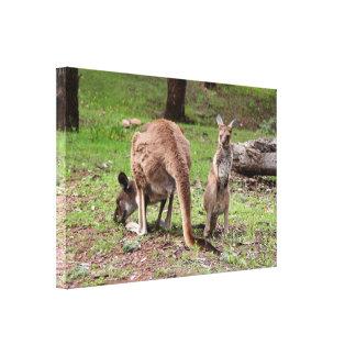 Mother kangaroo and joey, Australia Canvas Print