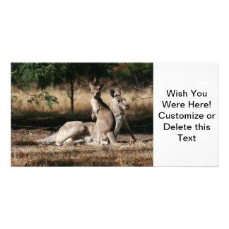 Mother Kangaroo and Joey Relaxing Photo Card