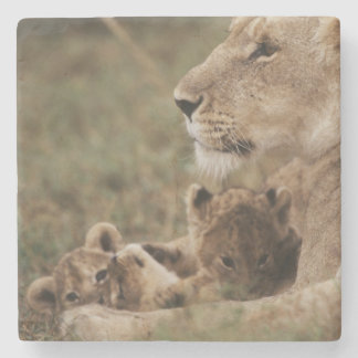 Mother Lion sitting with cubs Stone Coaster