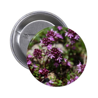 Mother of thyme flowers (Thymus praecox) 2 Inch Round Button