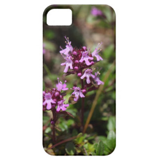 Mother of thyme flowers (Thymus praecox) iPhone 5 Case